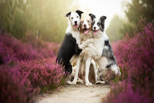 Tres simpáticos amigos