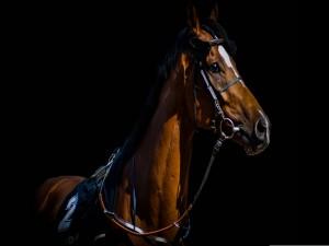 Un imponente caballo pura sangre