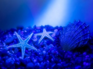 Postal: Estrellas de mar sobre guijarros
