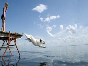 Perro saltando al agua