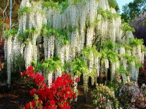 Postal: Cascada de flores