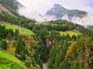 Montañas y bosques (Suiza)