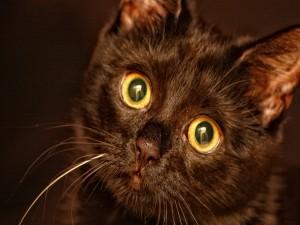 La mirada de un gato negro