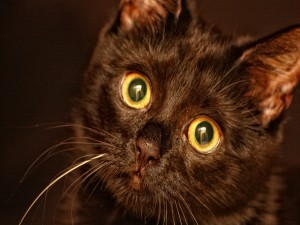 Postal: La mirada de un gato negro