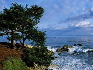 Postal: Árboles en la costa