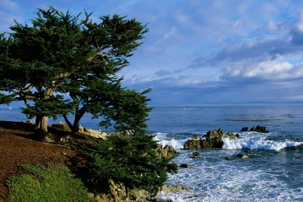 Árboles en la costa