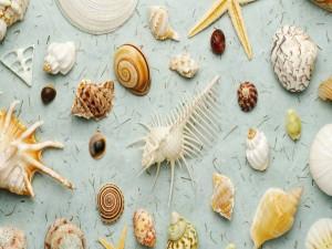 Postal: Diferentes conchas marinas