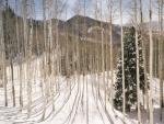 Bosque nevado en las montañas de Wasatch, Utah