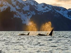 Osrcas cerca del Parque Nacional de los Fiordos de Kenai, Alaska