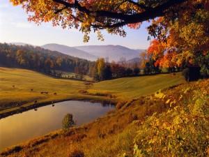 Postal: Vacas pastando en otoño