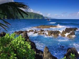 Plantas y rocas junto al mar