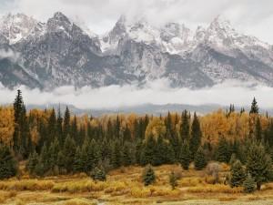 Árboles otoñales junto a unas montañas nevadas