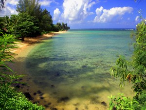 Postal: Naturaleza a orillas de una playa
