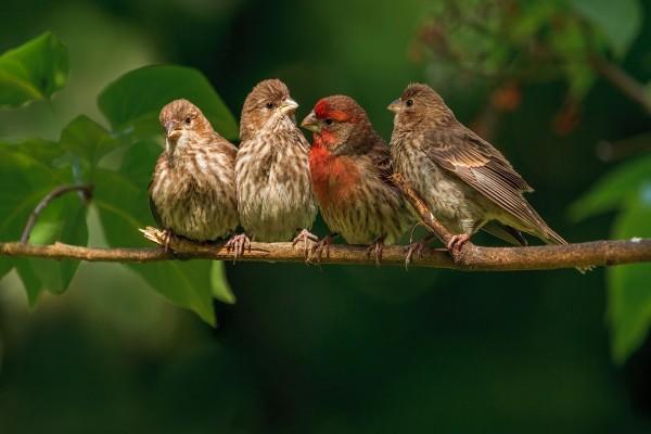 Gorriones libres sobre una rama