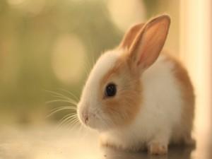 Hermoso conejito