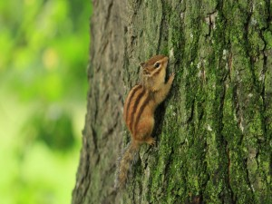 Postal: Pequeña ardilla trepando por el tronco de un árbol