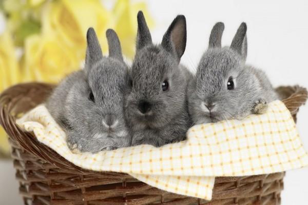 Tres lindos conejos grises dentro de una cesta