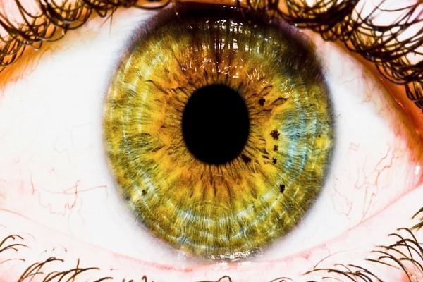 Un ojo visto al detalle
