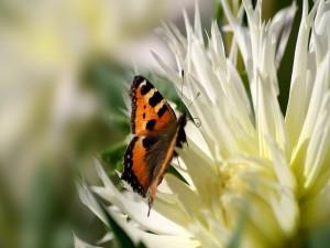 Postal: Mariposa sobre una flor de pétalos blancos