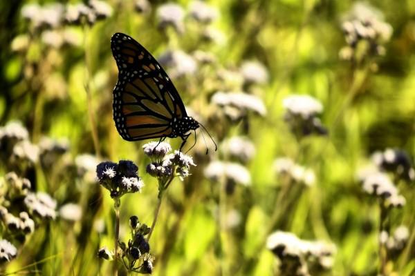 Una mariposa sobre un tallo con pequeñas flores