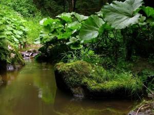 Pequeño río entre un bosque verde