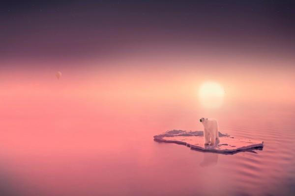 Oso polar sobre una pequeña isleta de hielo