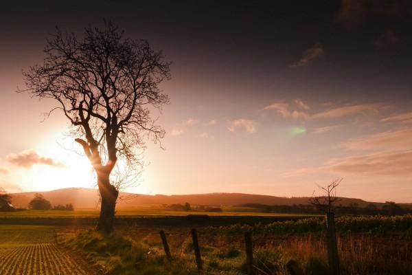 Salida del sol en el campo