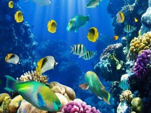 Postal: Peces en un gran acuario