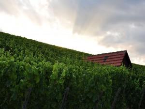 Postal: Pequeña casa entre el viñedo