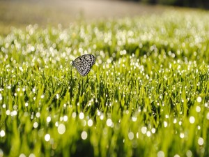 Postal: Mariposa sobre la brillante hierba