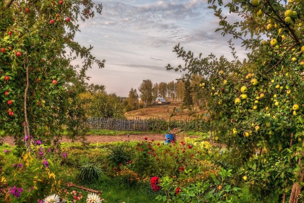 Un jardín con árboles frutales