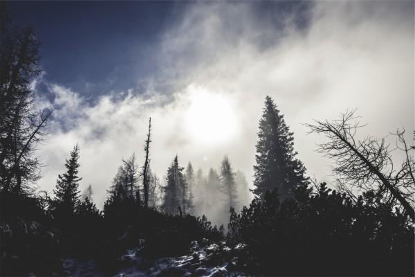 Sol cubierto de nubes sobre un bosque