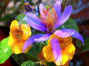 Flores de colores 3D