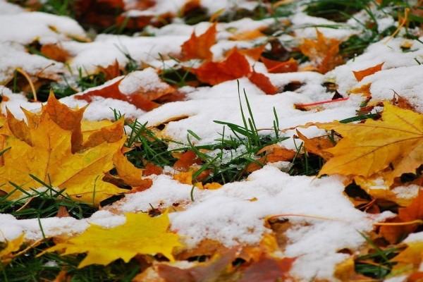 Nieve sobre las hojas secas