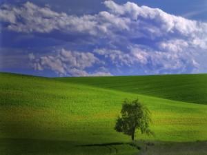 Postal: Un árbol bajo las colinas verdes