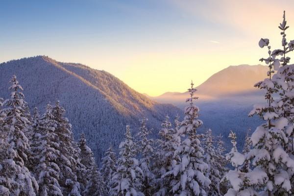 Hermoso paisaje con pinos cubiertos de nieve