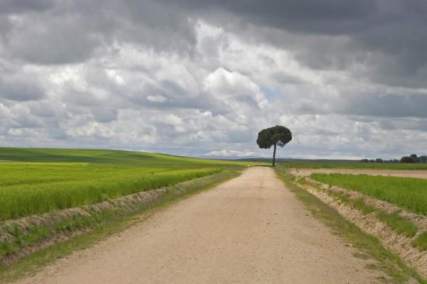 Árbol junto a un camino de tierra