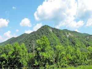 Postal: Montañas cubiertas de árboles verdes