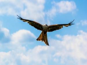 Águila volando en un cielo azul