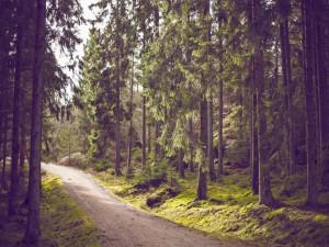 Postal: Camino en un bosque