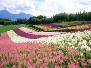 Postal: Los colores de la primavera