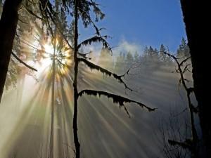 Reflejo de la fuerza del sol sobre un bosque
