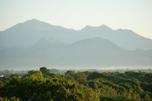 Árboles verdes bajo las montañas