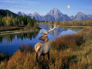 Postal: Ciervo en un bello paisaje
