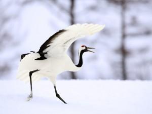 Ave caminando sobre la nieve