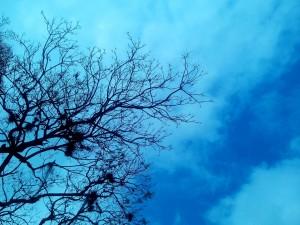 Postal: Cielo azul