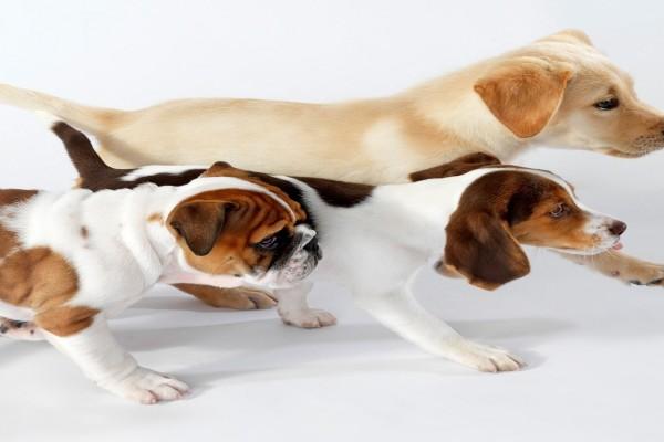Tres perros amigos