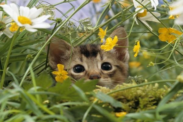 Gato escondido entre las flores silvestres