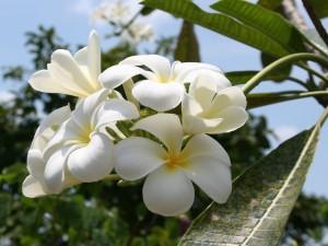 Bella flor blanca de verano