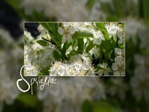 Tiempo de primavera (Spring time)